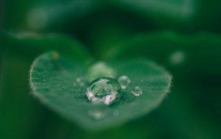 sostenibilità e plastificazione